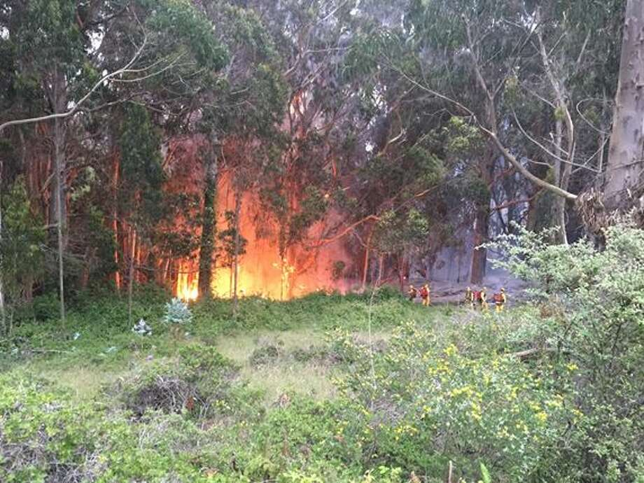 Crews from the Marin County Fire Department work to extinguish a fire in a eucalyptus grove just north of Bolinas on May 10, 2015. Photo: Courtesy / Marin County Fire Department / ONLINE_YES
