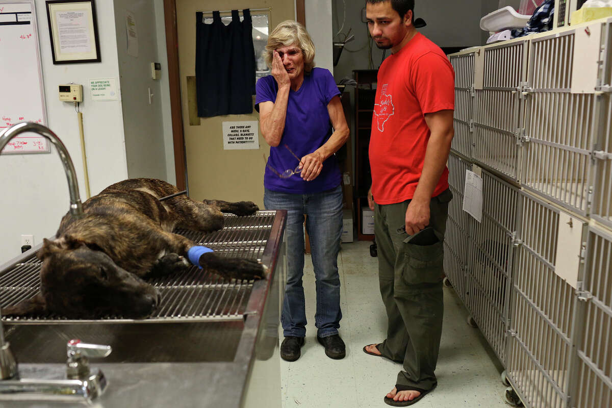 Mary Montes, and her son, Matt Montes, right, owner of Mission: Miracle K9 Rescue, say goodbye to Ziggy after he was euthanized at Animal Emergency Room in the early morning hours of Monday, May 11, 2015. Ziggy was shot with an arrow in Montes' front yard Sunday night. The arrow went though both kidneys and the caudal vena cava so Ziggy's life could not be saved.