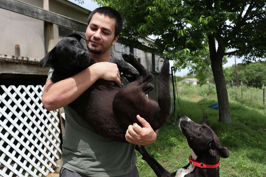 Matt Montes, owner of Mission: Miracle K9 Rescue, holds Miracle as Brittany looks for attention at his home near Bandera on Monday, May 11, 2015. Both dogs are rescues available for adoption, Montes took six dogs to foster homes where he thought they would be safer than on his property where two dogs have been targeted in the past three months.