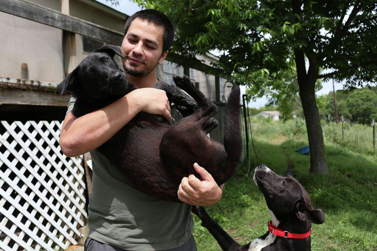 Matt Montes, owner of Mission: Miracle K9 Rescue, holds Miracle as Brittany looks for attention at his home near Bandera on Monday. Both dogs are rescues available for adoption, Montes took six dogs to foster homes where he thought they would be safer than on his property, where two dogs have been targeted in the past three months.