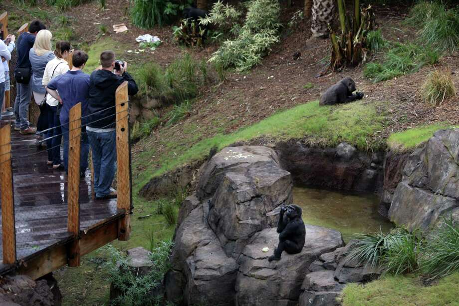 At the the Chevron Outlook, part of the new gorilla habitat at the Houston Zoo, visitors can watch the gorillas from on high. Photo: Mayra Beltran, Staff / © 2015 Houston Chronicle