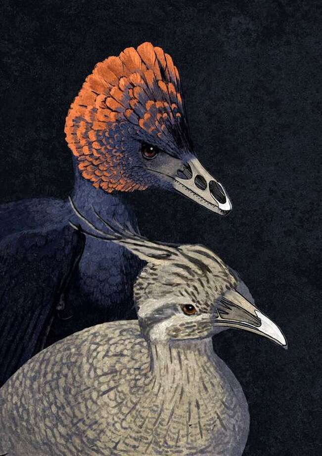 """Dino-chickens? (The news release telling us of this fantastic trick said not to call them that so we are … cuz!) Well, scientists have hatched chickens that have the same beak structures of  small dinosaurs such as Velociraptor and Archaeopteryx. Yale paleontologist and developmental biologist Bhart-Anjan S. Bhullar and Harvard developmental biologist Arhat Abzhanov figured out how to do this Jurassic Park like trick.Here's what Yale says: """"Using the fossil record as a guide, a research team led by Yale paleontologist and developmental biologist Bhart-Anjan S. Bhullar and Harvard developmental biologist Arhat Abzhanov conducted the first successful reversion of a bird's skull features. The scientists replicated ancestral molecular development to transform chicken embryos in a laboratory into specimens with a snout and palate configuration similar to that of small dinosaurs …"""""""