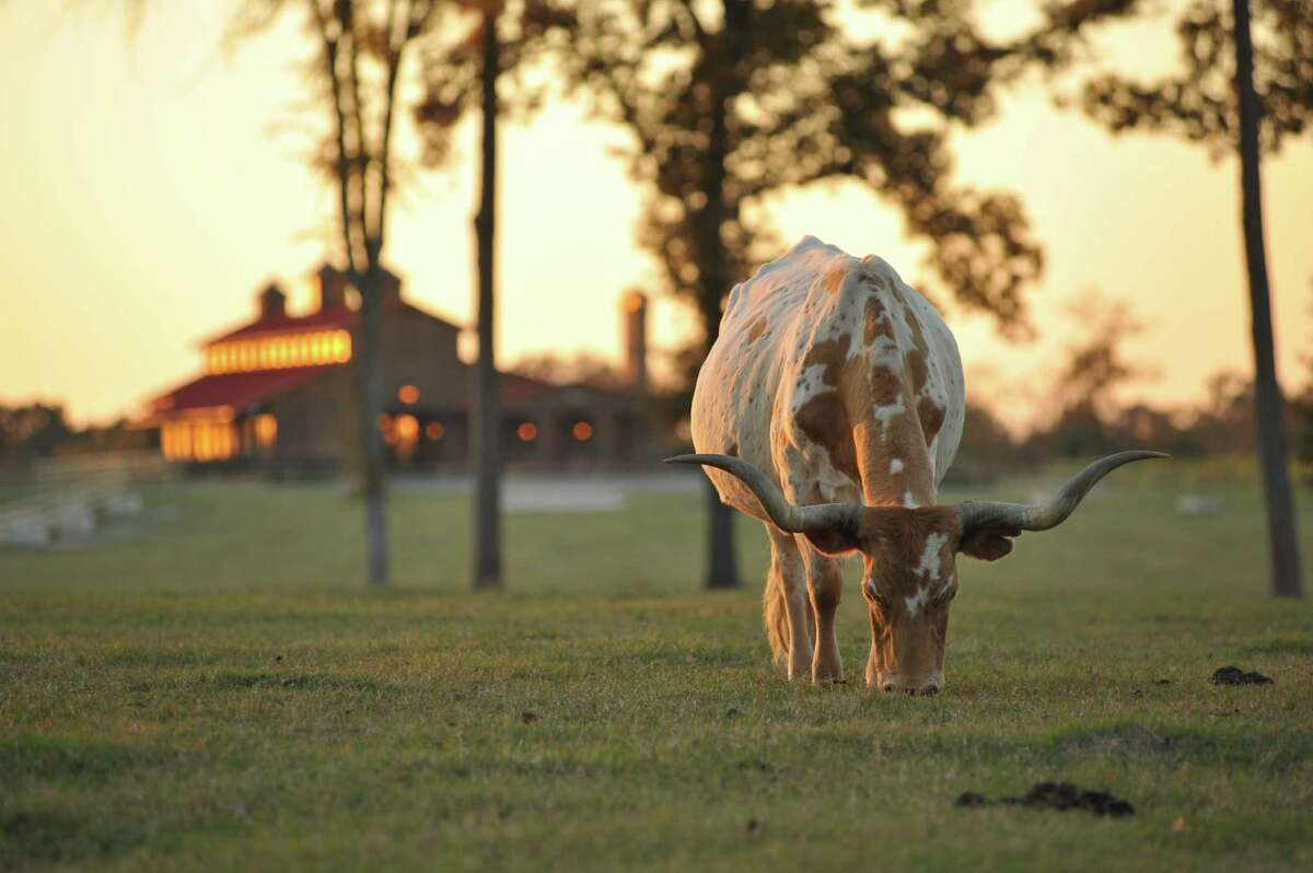 This 346-acre northeast Texas ranch sold at a live auction Tuesday for an undisclosed amount, estimated around $15 million.