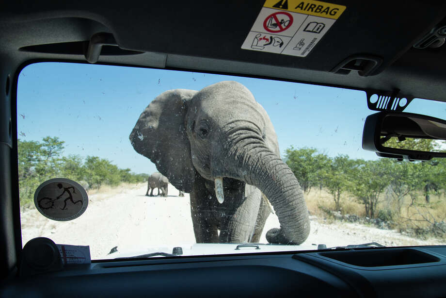 Elephant kills Argentine hunter in Namibia
