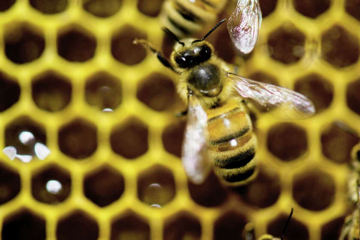 The study's authors were shocked to realize this was the first time they've noticed bees dying more in the summer than the winter.