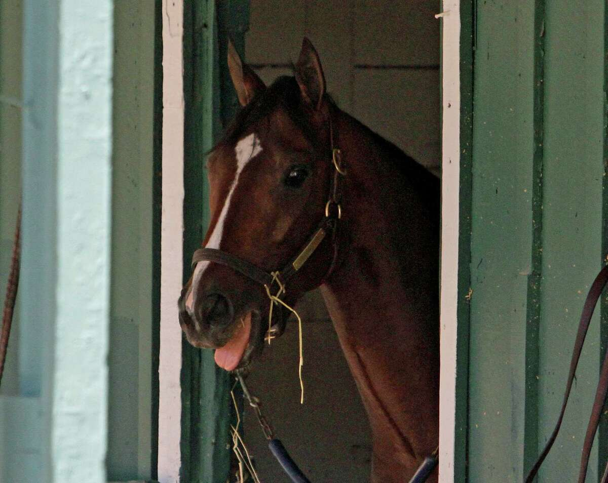 Preakness Stakes entrant Divining Rod peers from his stall in the stakes barn at Pimlico Race Course in Baltimore, Thursday, May 14, 2015 following his arrival from Fair Hill Training Center. (AP Photo/Garry Jones)