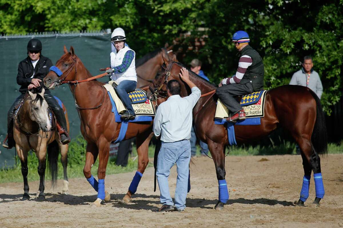 Kentucky Derby winner American Pharoah (R) and Dortmund walk to the track for training for the 140th Preakness Stakes at Pimlico Race Course on May 14, 2015 in Baltimore, Maryland.