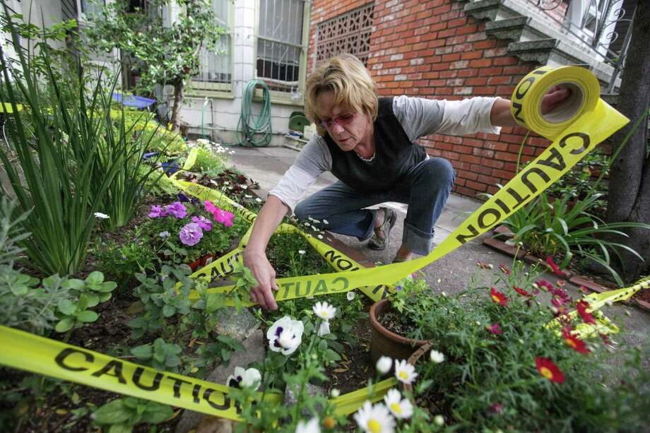 Shelley Riedstra who fears for her petunias, puts yellow caution tape around her flower beds on May 15, 2015 in San Francisco, CA. She is preparing for the Bay to Breakers race on Sunday. Riedstra lives along the route of the race and has experienced chaos in past years. Photo: Gabrielle Lurie / ONLINE_YES