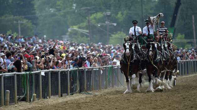 The Budweiser Clydesdales make an appearance at Pimlico Race Course Friday May 16, 2015 in Baltimore, Maryland.   (Skip Dickstein/Times Union) Photo: SKIP DICKSTEIN