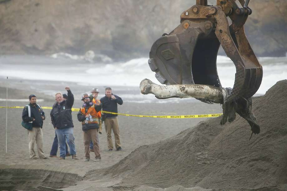 Workers watch as a female humpback whale, that washed ashore earlier this month, is buried on Sharp Park State Beach on Tuesday, May 19, 2015 in Pacifica, Calif. Photo: Lea Suzuki, The Chronicle