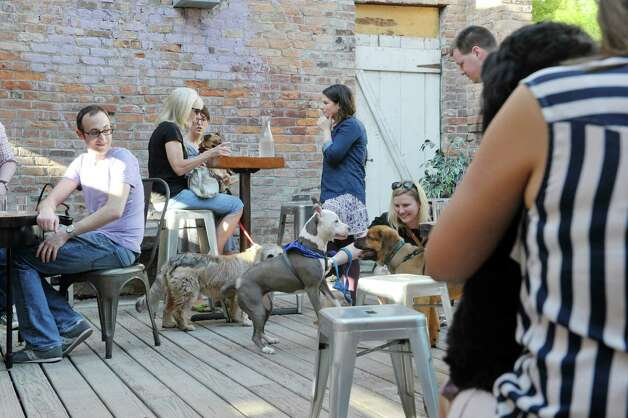 Dog owners and their dogs visit with each other at Yappy Hour at  Lucas Confectionery on Sunday, May 17, 2015, in Troy, N.Y.  The wine bar has a weekly happy hour for dogs and their owners.    (Paul Buckowski / Times Union) Photo: PAUL BUCKOWSKI / 00031867A