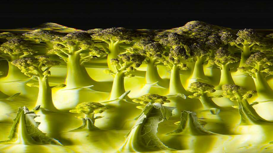 """""""Broccoli Forest"""" by photographer John Csongradi will be featured in a solo exhibition May 21 through June 28 at the Peninsula Art Institute, with a closing-day reception . from 1-4 p.m. Photo: John Csongradi"""