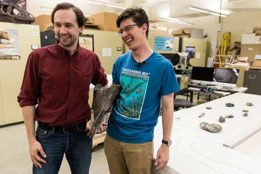 Dr. Christian Sidor, left, Burke Museum curator of vertebrate paleontology, and Brandon Peecook, right, a University of Washington graduate student, show off the first dinosaur fossil ever found in Washington state: an 80-million-year-old partial left femur bone of a theropod dinosaur, photographed Wednesday, May 20, 2015, at the Burke Museum in Seattle, Washington. The bone was collected by Burke Museum paleontologists on the shore of Sucia Island State Park in the San Juan Islands in May 2012. The rest of the two-legged, carnivorous dinosaur was likely washed away or carried away by scavengers. The fossil will be on display in the Burke Museum's lobby beginning Thursday, May 21. (Jordan Stead, seattlepi.com) Photo: JORDAN STEAD, SEATTLEPI.COM