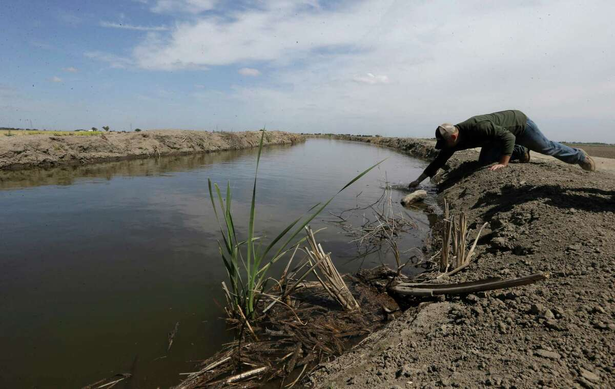 In this May 18, 2015 photo, Gino Celli draws a water sample to check the salinity in an irrigation canal that runs through his fields near Stockton, Calif. Celli farms 1,500 acres of land and manages another 7,000 acres, has senior water rights and draws his irrigation water from the Sacramento-San Joaquin River Delta. Farmers in the Sacramento-San Joaquin River Delta who have California's oldest water rights are proposing to voluntarily cut their use by 25 percent to avoid the possibility of even harsher restrictions by the state later this summer as the record drought continues.(AP Photo/Rich Pedroncelli)