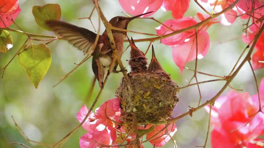 "Jeanne Finley captured the beginning of life for two tiny hummingbirds in ""Protocol #1."""