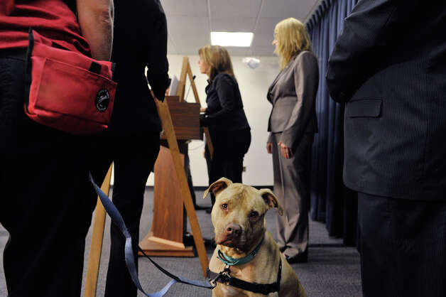 Diggy stands next to his owner, Alyssa Bazan with the Mohawk Hudson Humane Society during a press conference by legislators and organizations that are in favor of the Dining with Dogs bill, on Tuesday, May 19, 2015, in Albany, N.Y.  (Paul Buckowski / Times Union) Photo: PAUL BUCKOWSKI, Albany Times Union / 00031915A