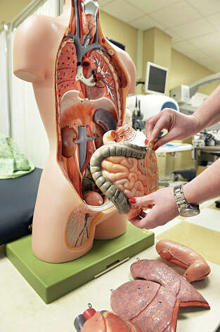 A physician assistant student uses an anatomical model in the tasks room at Albany Medical College's Standardized Patient program Thursday March 19, 2015 in Albany, NY.  (John Carl D'Annibale / Times Union) Photo: John Carl D'Annibale / 518Life / 00031014A