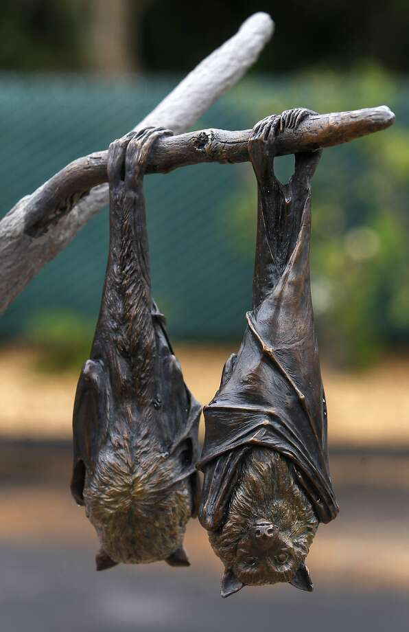 Fruit bat sculptures hang out after being installed at the San Francisco Zoo, which will open its Sculpture and Learning Plaza on Saturday, June 6, giving visitors a chance to touch the animal creations. Photo: Paul Chinn, The Chronicle