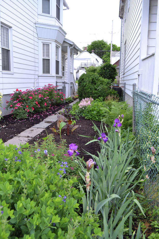 We visited DiNovo's Lansingburgh home and toured her well-loved garden last year. Photo: Emily Jahn/518Life