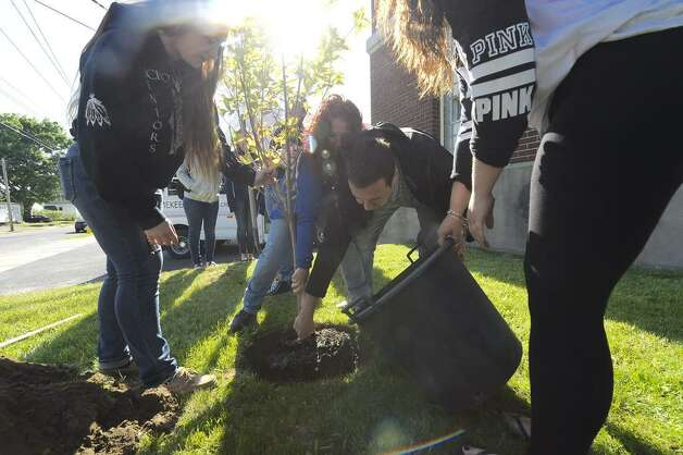 Members of the Schoharie girls' volleyball team plant a tree at the Mekeel Christian Academy in Scotia Friday to honor Carly Sinnott, the 17-year-old Mekeel student from Clifton Park who died May 12 in a fall at the Plotter Kill Nature Preserve in Rotterdam. (Skip Dickstein / Times Union)