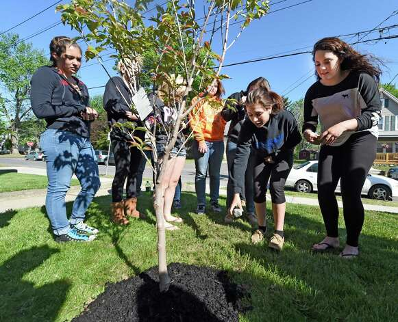 Members of the Schoharie High School Volleyball team put rocks with personal messages inscribed on them at the base of a flowering dogwood tree that they planted on the grounds of Mekeel Christian Academy in memory of Mekeel Volleyball captain Carly Sinnott Friday morning, May 22, 2015, in Scotia, N.Y. (Skip Dickstein/Times Union) Photo: SKIP DICKSTEIN / 00031966A