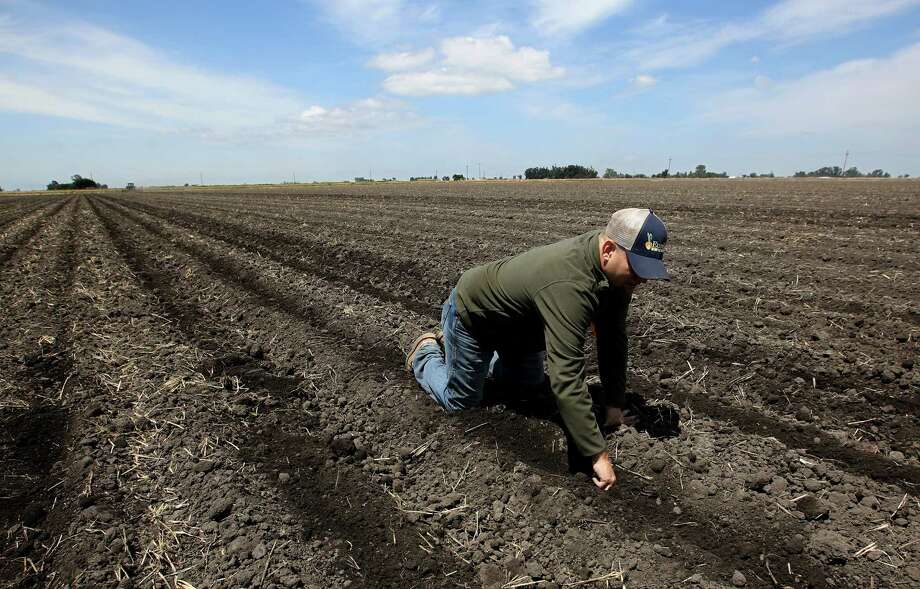 Gino Celli checks the moisture of land just planted with corn seed on land he farms near Stockton, Calif. Farmers are voluntarily cutting their water usage by 25 percent to help the drought-stricken state.  Photo: Rich Pedroncelli, STF / AP