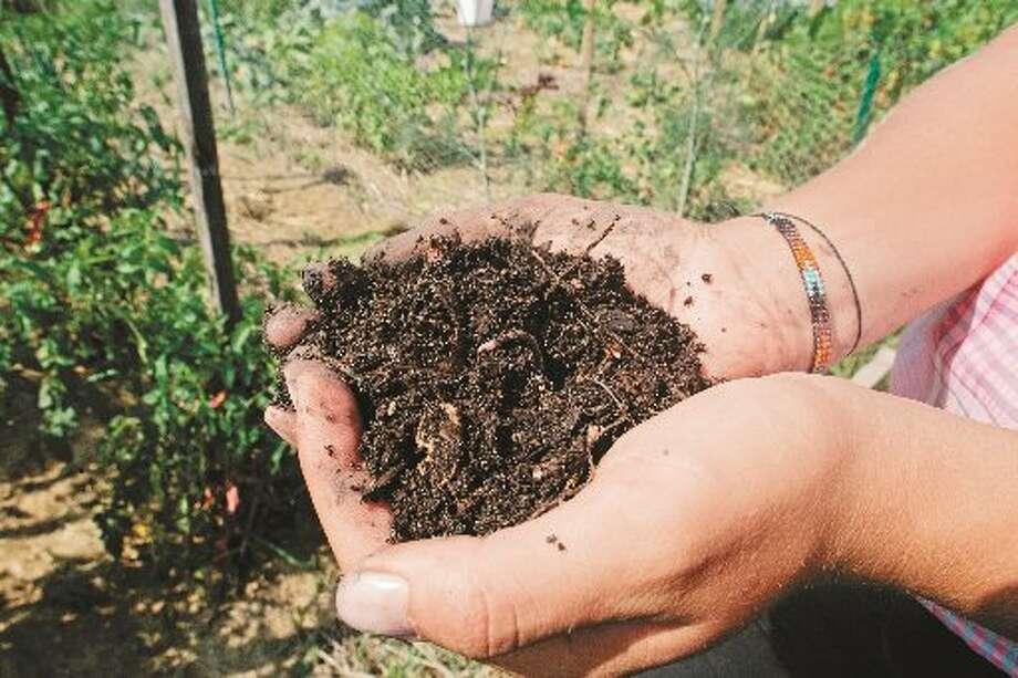 Compost — rich, dark and full of organic matter — feeds soil organisms.