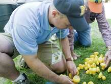 Newtown Lions Club Duck Race Committee members Mike Savinelli and Tom Evagash check the numbers on the bottom of the ducks prior to the start of the race at the Newtown Lions Club's 15th annual Great Pootatuck Duck Race in Sandy Hook. Saturday, May 23, 2015