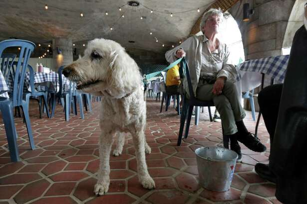 """Loni Dantzler, from San Francisco, with her 11-year-old Goldendoodle service dog """"Zola,"""" visit a cafe in a Manhattan park, on New York's Upper West Side, Tuesday, May 19, 2015. Fido is seeking a place at the outdoor dining table, or at least under it. New York  could soon become the latest in a series of states to smile on dining with canines,  potentially making dogs de rigeur among the tight sidewalk tables and narrow patios of New York City's restaurant scene. (AP Photo/Richard Drew)"""