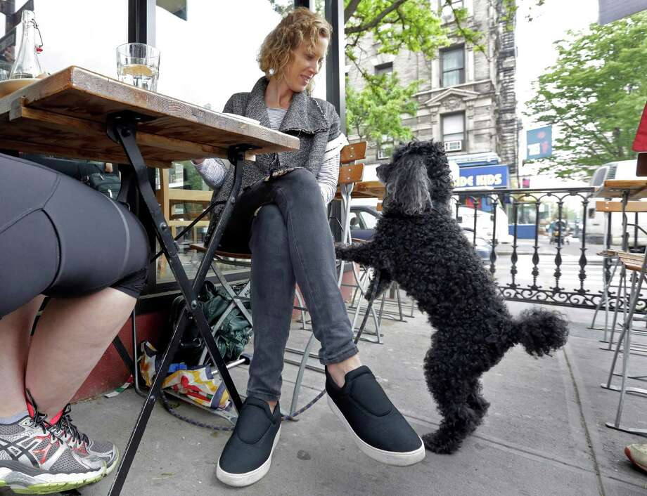 Marni Turner dines with her 10-year-old poodle Dougie at an outdoor cafe on New York's Upper West Side. Photo: Richard Drew, STF / AP