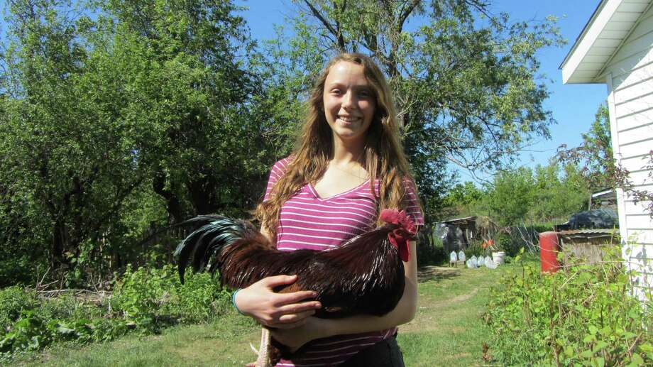 """Marcy Forti, 14, with her Rhode Island Red """"Gerard Way"""" at her home in Knox. (Bob Gardinier/Times Union)"""