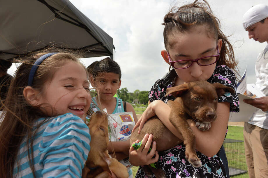 Sisters Nyaeh (left) and Nevaeh Gutierrez get to know their new puppies at Bark in the Park — Perrito Grito at Rosedale Park. Photo: Robin Jerstad /For The San Antonio Express-News