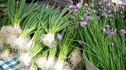 The Darien Farmers Market kicks off its 2015 season on Wednesday May 27 at the Goodwives Shopping Center located at 25 Old Kings Highway North in Darien, CT.  It will be open every Wednesday through Christmas from 11:00am to 4:00pm, rain or shine.