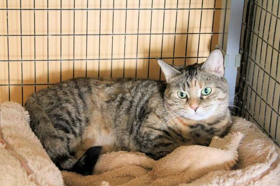 Kami has beautiful green eyes and loves attention. (Mary Lou Baker)