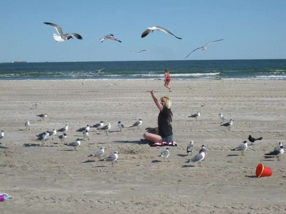 Vibrant bird life and large beaches are two of the main reasons Port Aransas stands out as a vacation destination. Photo: CHUCK BLOUNT, STAFF / © San Antonio Express-News