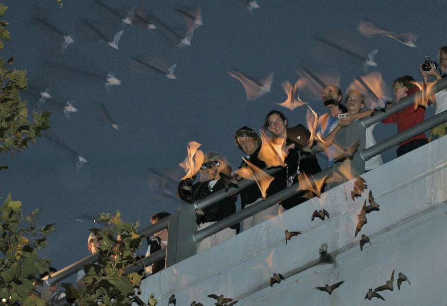 Visitors to the Waugh Bridge can get an up-close view of bats that call the bridge home, just as sun sets in Houston. Months after Hurricane Harvey flooded out the bats' habitat they are finally returning little by little.