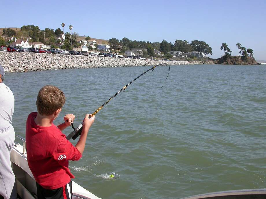 Young boy fights a striped bass along the rock wall near San Quentin Prison on the San Pablo Bay. On Thursday evening, two private boaters rescued two people stranded in the bay, according to the US Coast Guard. Photo: Tom Stienstra