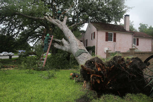 A crew works Tuesday May 26, 2015 to clean up a large tree that fell in front a house after last weekend's storm. The house is located on the 200 block of West Lynwood in the Monte Vista neighborhood.