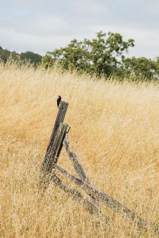 Olompali State Historic Park offers Miwok history and wide-open space to Novato visitors. Photo: Jason Henry, Jason Henry For Medium