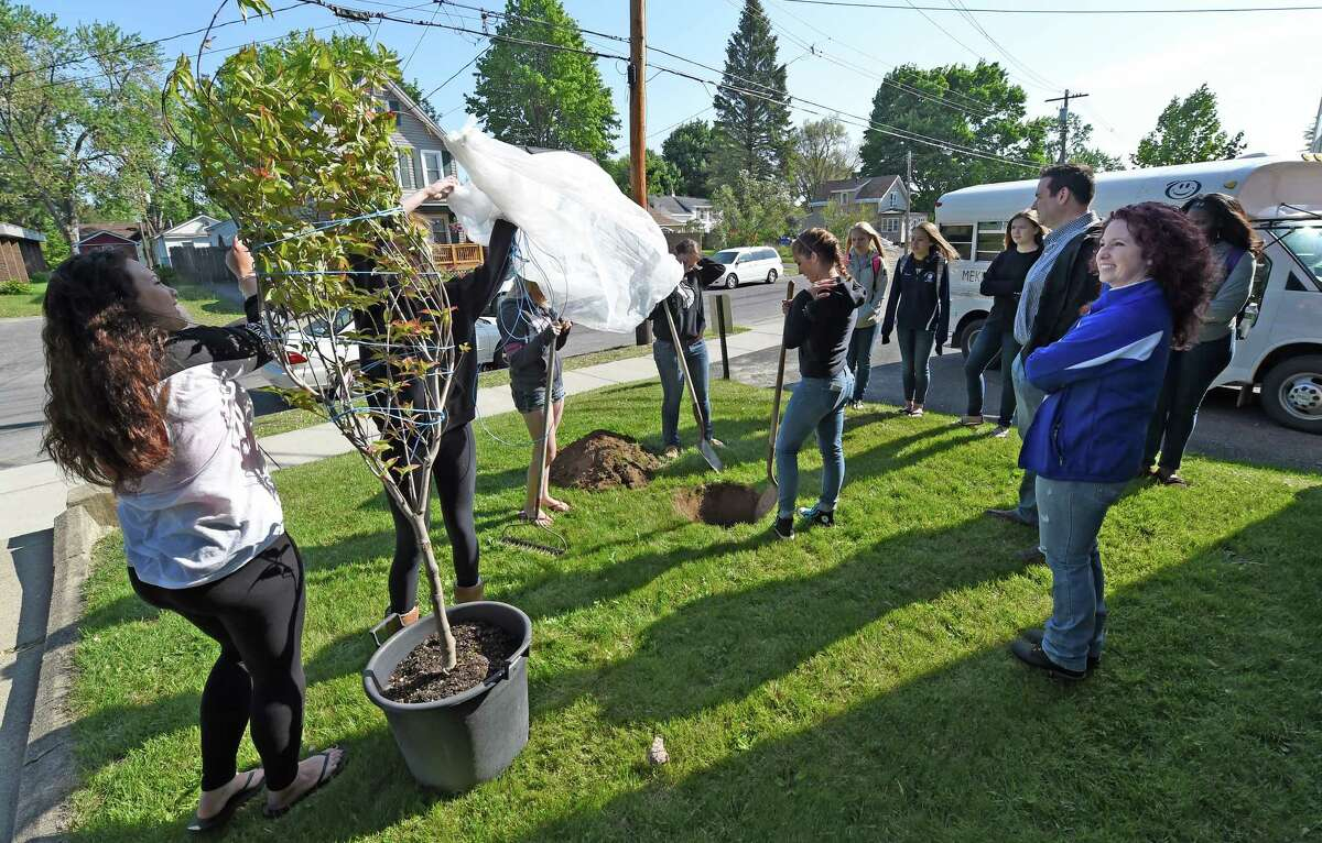 Members of the Schoharie High School Volleyball team plant a flowering dogwood tree on the grounds of Mekeel Christian Academy Friday morning May 22, 2015, in memory of Mekeel Volleyball captain Carly Sinnott in Scotia, N.Y. (Skip Dickstein/Times Union)