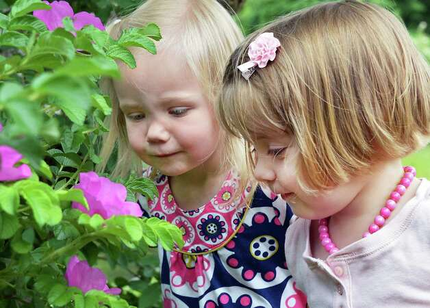 Aggie Obstarczyk, 3, left, of Saratoga Springs and Grace Peterson, 2, of Gansevoort check out Rugosa Roses in bloom at Congress Park Thursday May 28, 2015 in Saratoga Springs, NY.  (John Carl D'Annibale / Times Union) Photo: John Carl D'Annibale