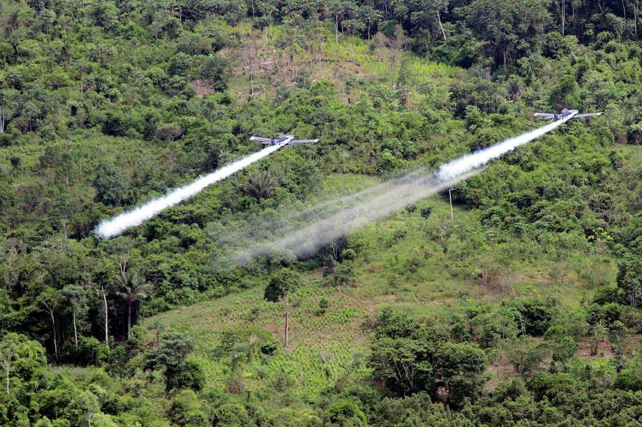 Cultivation of the leaf used to make cocaine skyrocketed in 2014 in Colombia, according to a new White House report released partially on May 4, 2015. This is likely to pressure the government to preserve a threatened U.S. aerial eradication program that's been at the heart of the drug war for over a decade. But if it hasn't worked for 50 years, why continue it? Photo: FERNANDO VERGARA /Associated Press / AP