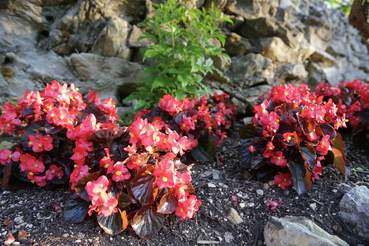 The Japanese Tea Garden in Brackenridge Park includes plenty of colorful flowers popular in Texas.