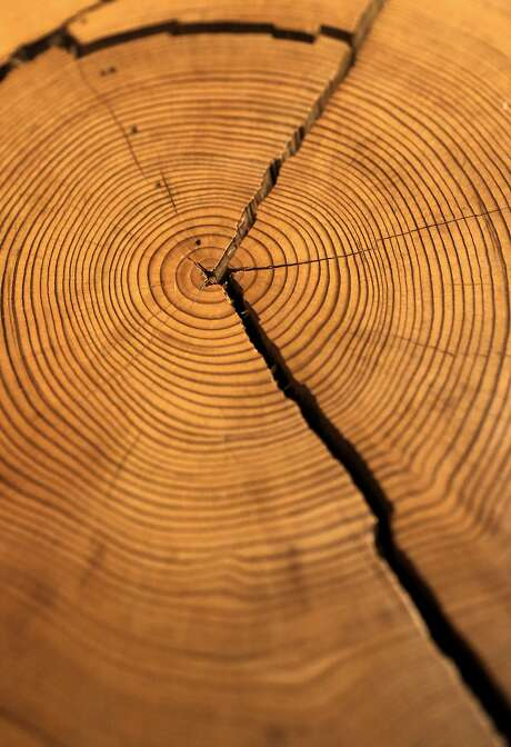 """A cross second taken from the """"Vortex"""" tree which fell in June of 2011 shows the tree to be at least 693 years old, on display at the visitors center at the Muir Woods National Monument, Calif. on Fri. May 29, 2015. Photo: Michael Macor, The Chronicle"""