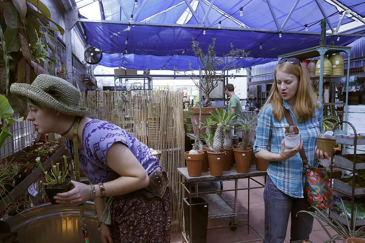 Moly Endries (left) looks for carnivorous plants while Laura Wehrley (right) looks for succulents at Cactus Jungle nursery in Berkeley, California, on Monday, June 1, 2015.