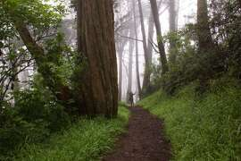 Take a hike on Mount Davidson.  On drippy days, it's like a rain forest.