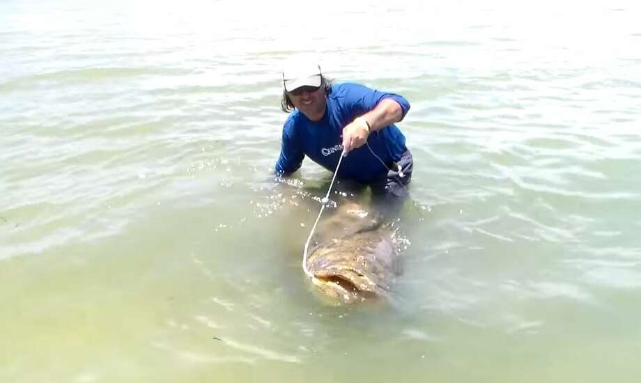 Florida Man Catches Giant 552 Pound Grouper From A Kayak Houston Chronicle