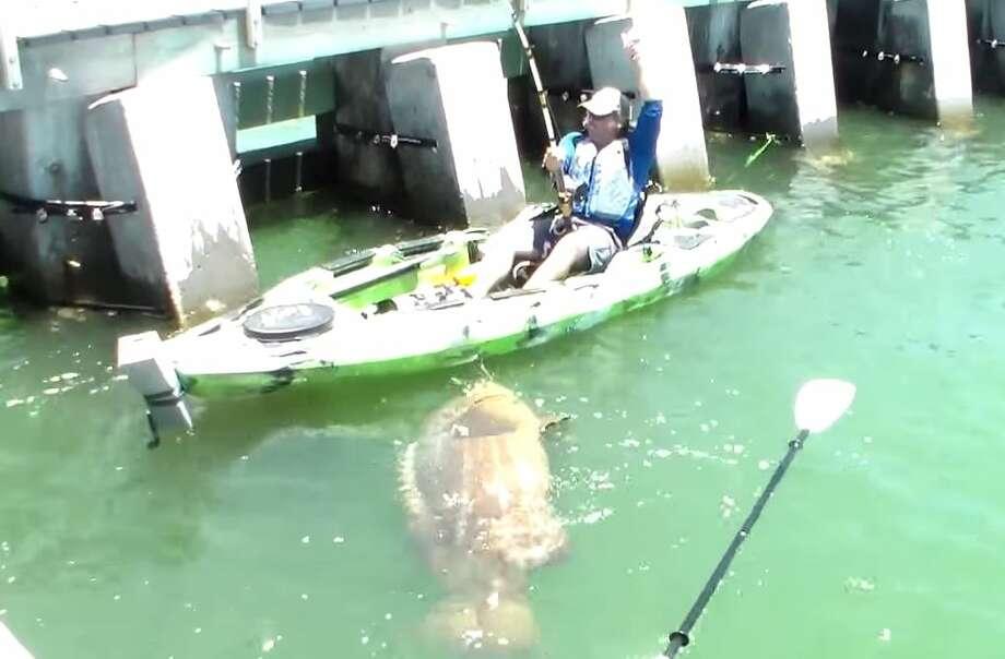 Jon black caught this giant goliath grouper off the coast of florida