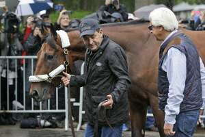 American Pharoah can reign forever with win in Belmont - Photo