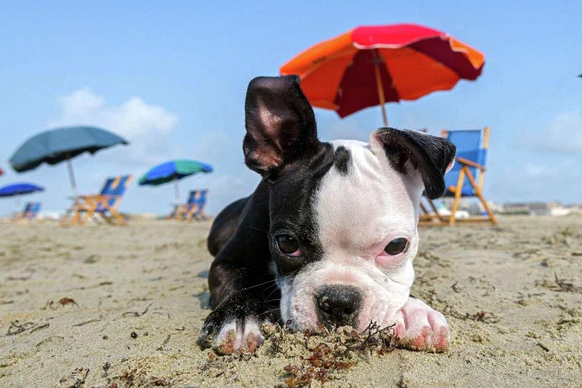13. Galveston Island's East Beach Estimated trip cost: $113.67